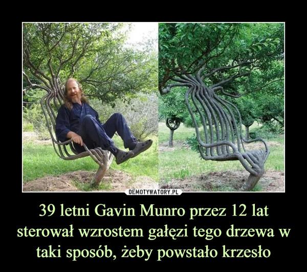 39 letni Gavin Munro przez 12 lat sterował wzrostem gałęzi tego drzewa w taki sposób, żeby powstało krzesło –