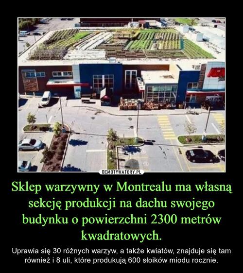 Sklep warzywny w Montrealu ma własną sekcję produkcji na dachu swojego budynku o powierzchni 2300 metrów kwadratowych.