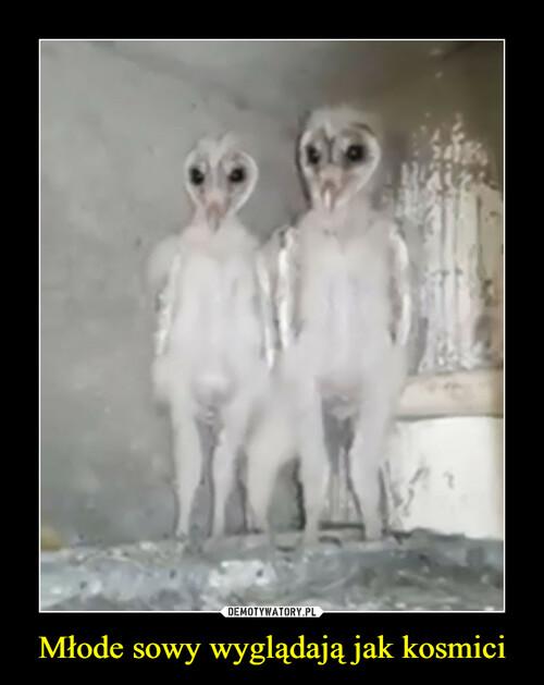 Młode sowy wyglądają jak kosmici