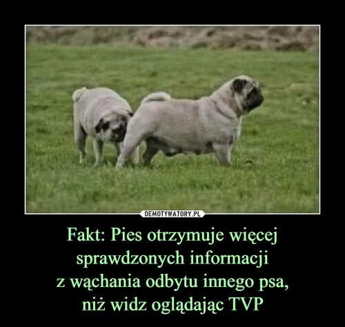 Fakt: Pies otrzymuje więcej sprawdzonych informacji z wąchania odbytu innego psa, niż widz oglądając TVP