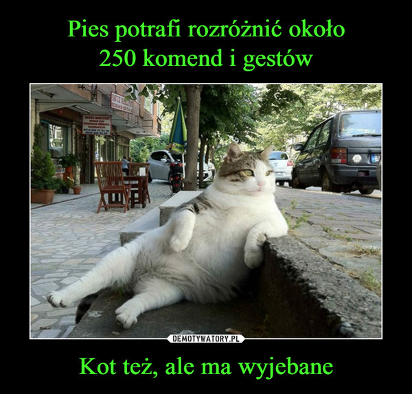 1547890329_sqc5vn_600.jpg
